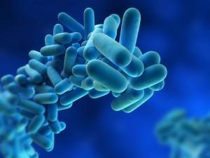 Prevención y Control de Legionella y Aspergillus en Vélez Málaga